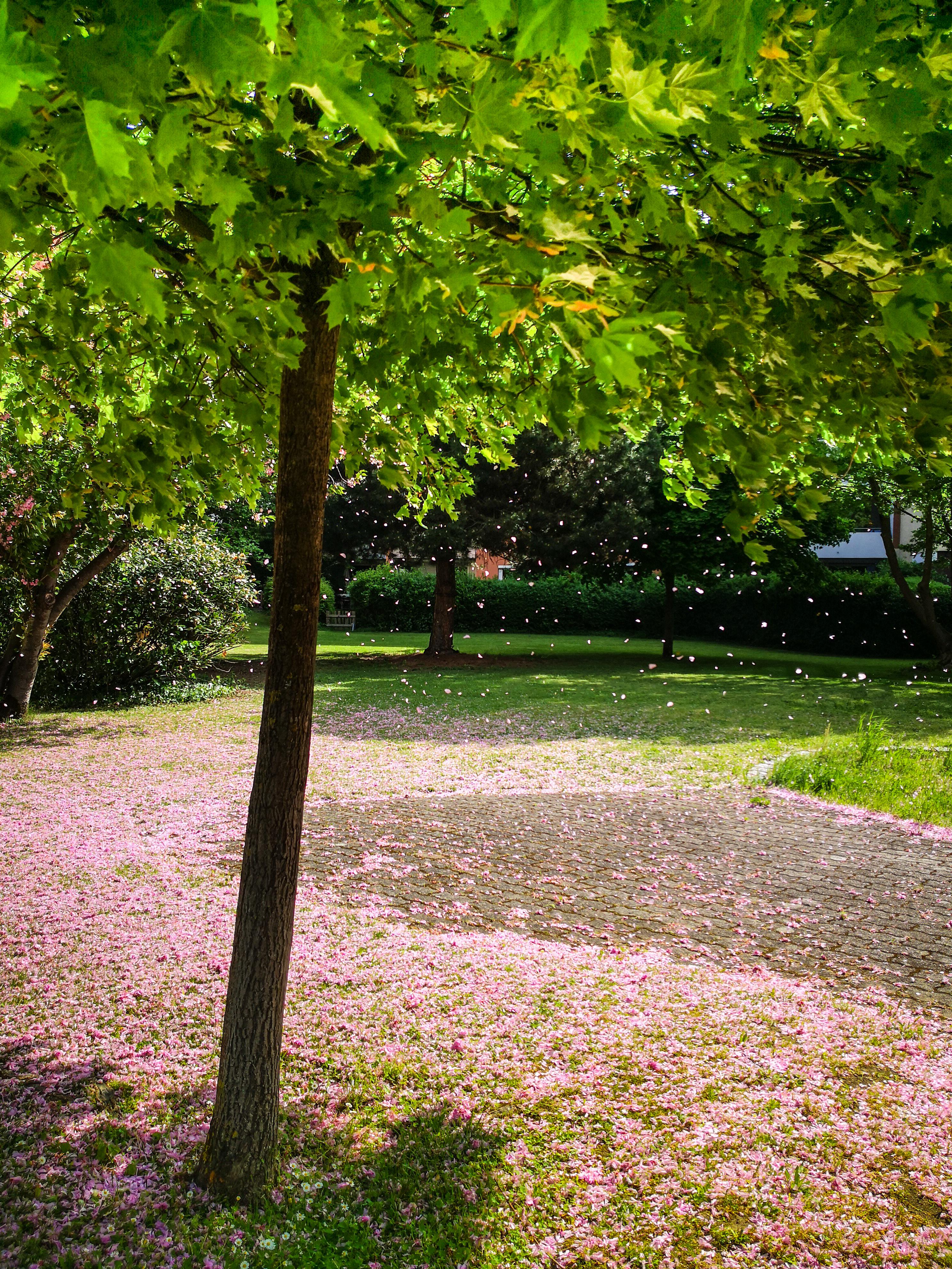 Frühling in St. Georgen